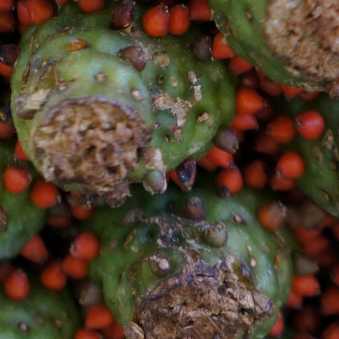 Up close of dozens of small green pyramid-like structures accented with tiny red spheres