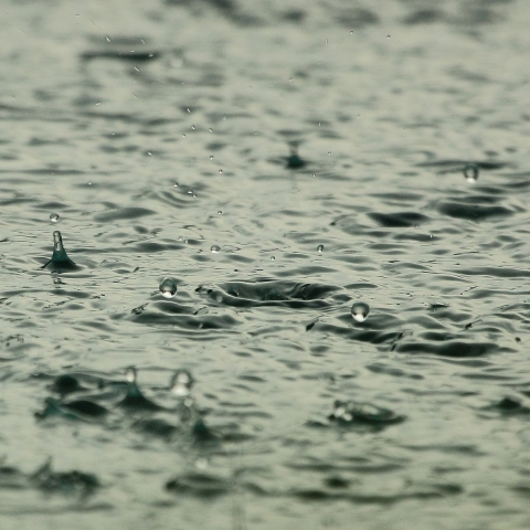 Drops of rain pelt the surface of water
